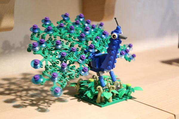 Peacock by Rachel